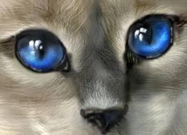Уникальные кошачьи глаза