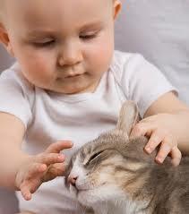 малыш и животное