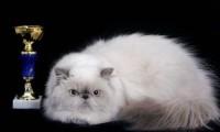 Клуб любителей кошек «Кошкин дом»