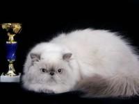 кошка-призер