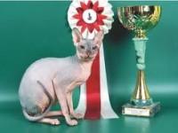 кошка-чемпион