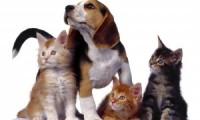 Ветеринарная клиника Нижнего Новгорода «Неотложка»