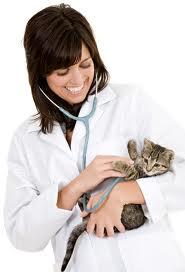 кошка и врач