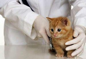 Кошка на осмотре