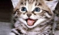 Аллергия на кошек:распространенные заблуждения