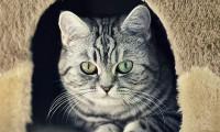 Гостиница для кошек «Любимец»