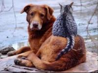 приют для кошек и собак