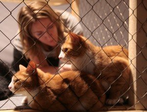 приют для кошек