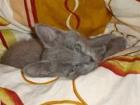 Кошка Веник
