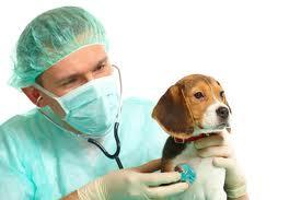 собака в клинике