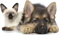 Ветеринарный центр «Гален»