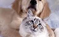 Ветеринарная служба ЗООМИР
