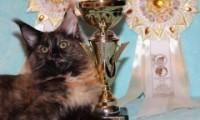 Выставка кошек 2013