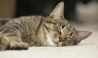 Где кошка спит?