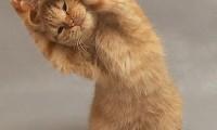 Чем страшно и как бороться с ожирением у кошек
