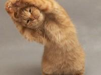 зарядка у кошек