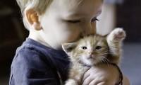 Котенок для ребенка:купить или нет?