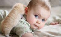 Порода не главное при выборе котенка для ребенка