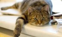 Стареющая кошка:как себя вести?