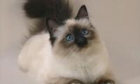 Зачем человек заводит в доме кошку?