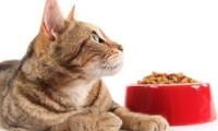 Диета стареющей кошки