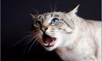Психология кошек и о том, как найти с ними общий язык