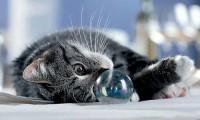 Когда кошка болеет