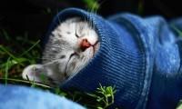 Когда кошка болеет простудой