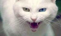 Кошка может быть опасной