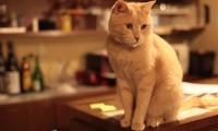 Уход за стареющей кошкой