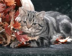 стареющая кошка