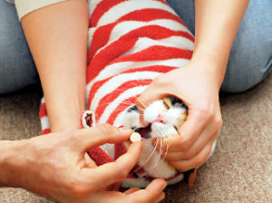 дать кошке таблетку