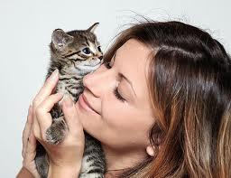 завоевать доверие котенка