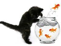 котенок и рыбки