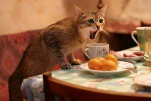 котенок лазит по столам