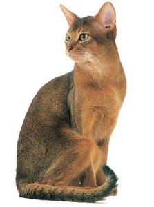 кошка в форме