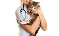 Подготовка к стерилизации кошки