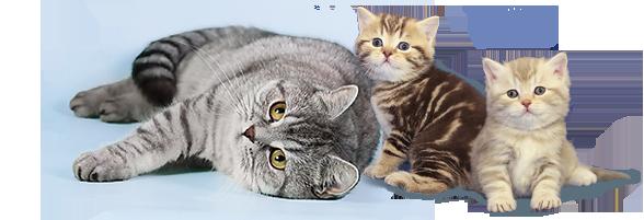 кошка и два котенка
