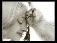 кошка и друг