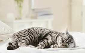 кошкин сон