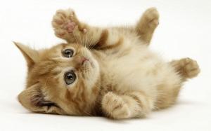 Как сделать так чтобы котенок не боялся