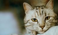 Если кошка отказывается от еды