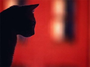 жизнь кошки