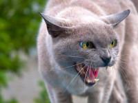 как усмирить кошку