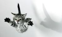 У кошки девять жизней?
