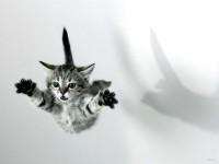 котенок прыгнул