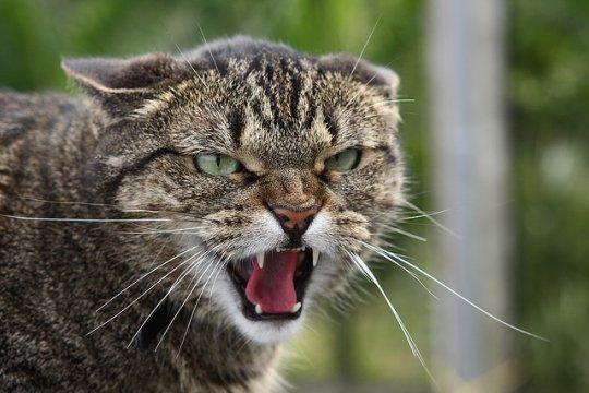 кошка агрессивна