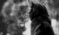Адаптация кошки к новому месту. История.