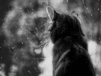 кошка в окне