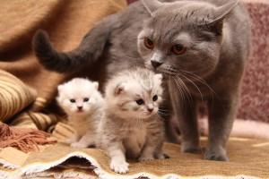 кошка-мать и котята
